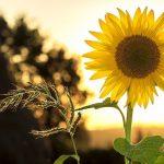 Parasol du jardin : la protection idéale pour profiter du soleil cet été !